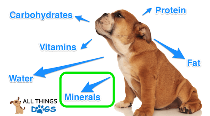 6 Important Nutrients for Dogs
