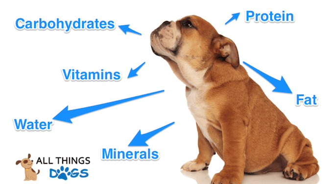 6 Nutrients for Dogs