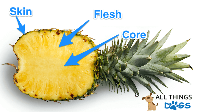 The Anatomy of a Pineapple