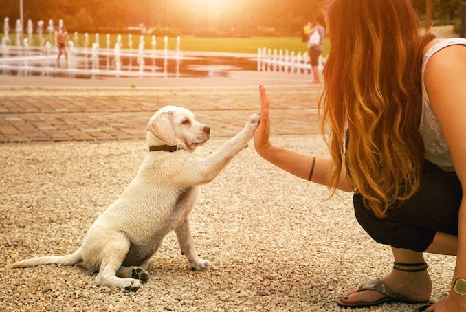 A puppy high-fiving their owner