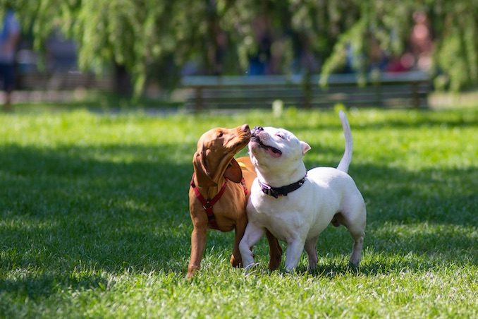 Two dogs playing together in the park