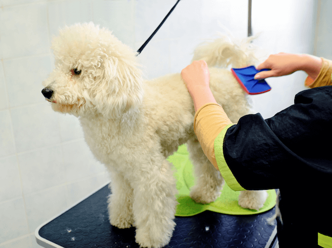 Grooming Requirements of a Sheepadoodle