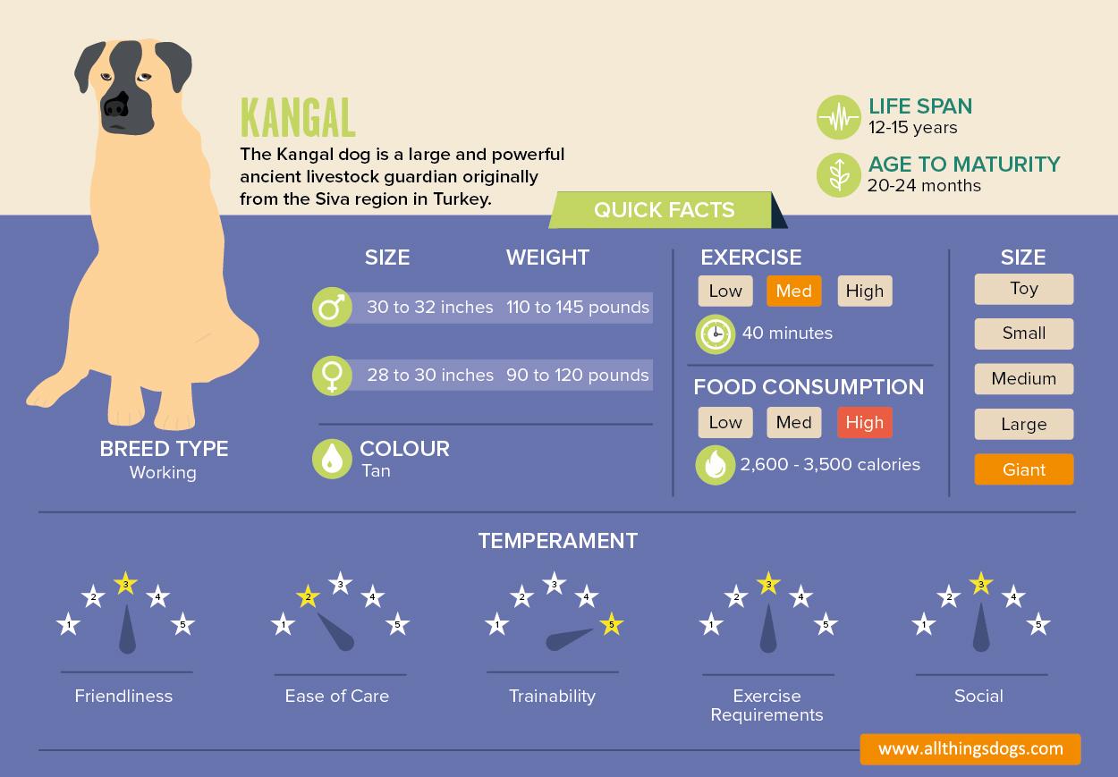 Kangal Infographic