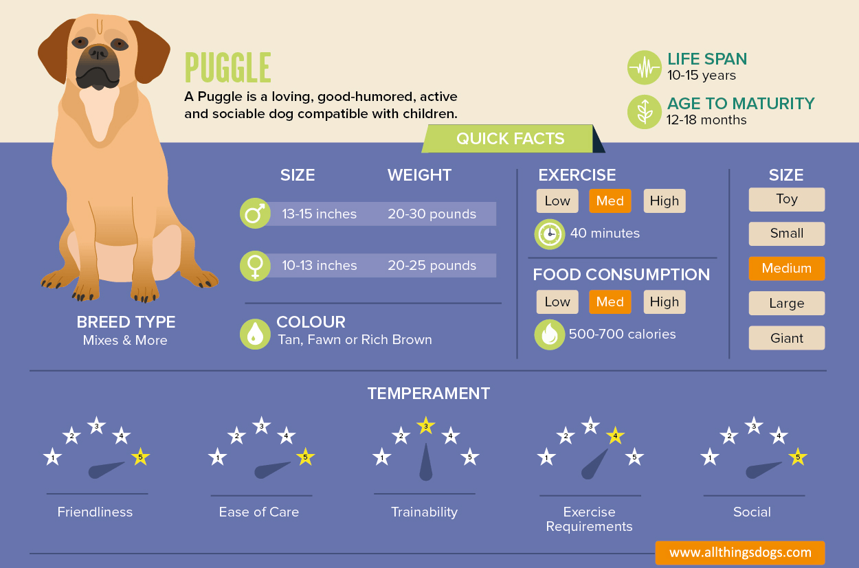 Puggle Infographic