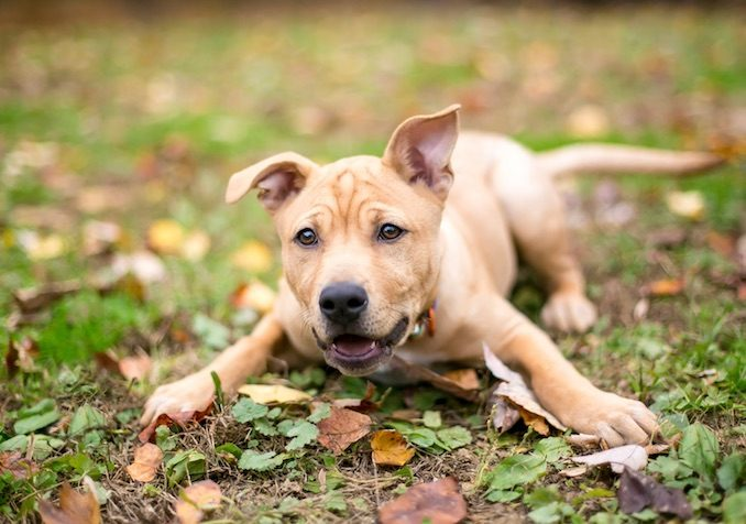 Puppy Training Tips 45 Dog Experts Share Their Secrets All Things