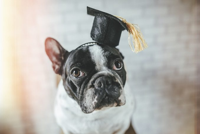 A dog with a graduation cap