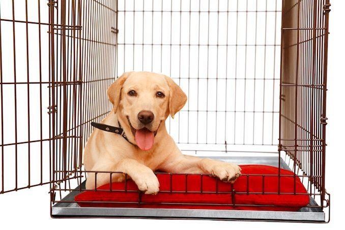 A dog sat in a crate
