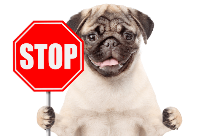 A Pugg with a Stop Sign
