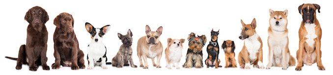 100 Dog Breeds