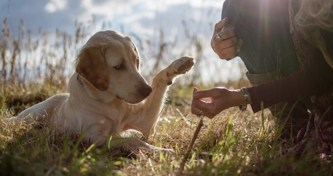 Dog Giving Their Paw to an Owner