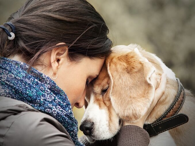 Loyalty Between Canines and Humans