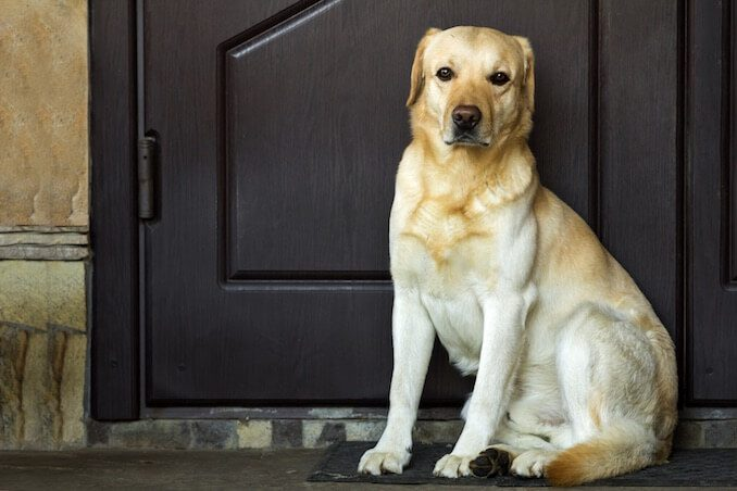 14 Dog Shelters Speak Out: What You Should Know BEFORE