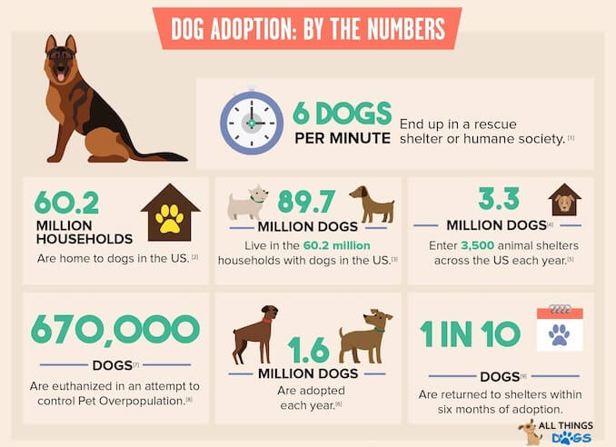 Dog Adoption by the Numbers