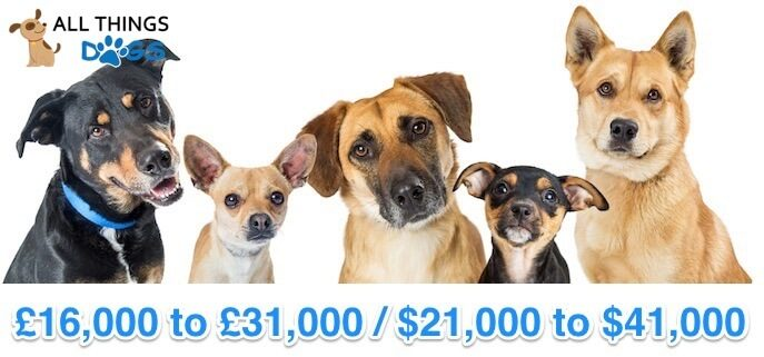 Lifetime Ownership Cost of a Dog