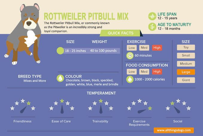 Rottweiler Pitbull Mix Infographic