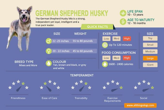 German Shepherd Husky Mix Infographic