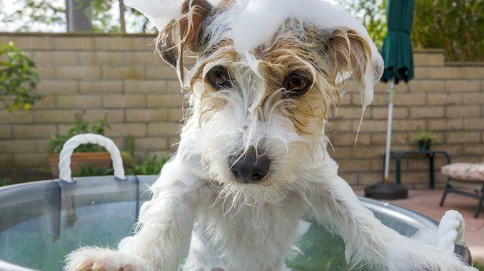 Homemade Dog Shampoo Recipes