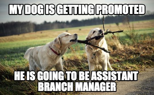 My dog is getting promoted