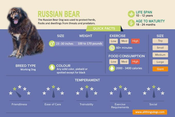 Russian Bear Dog Infographic
