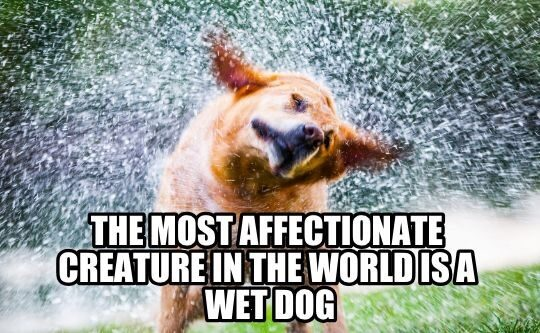Wet Dog Grooming Meme