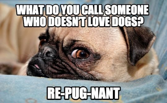 67 Dog Puns Which Will Pawsitively Make You Howl – All Things Dogs