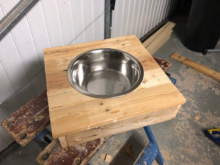 Place the dog bowl into its stand