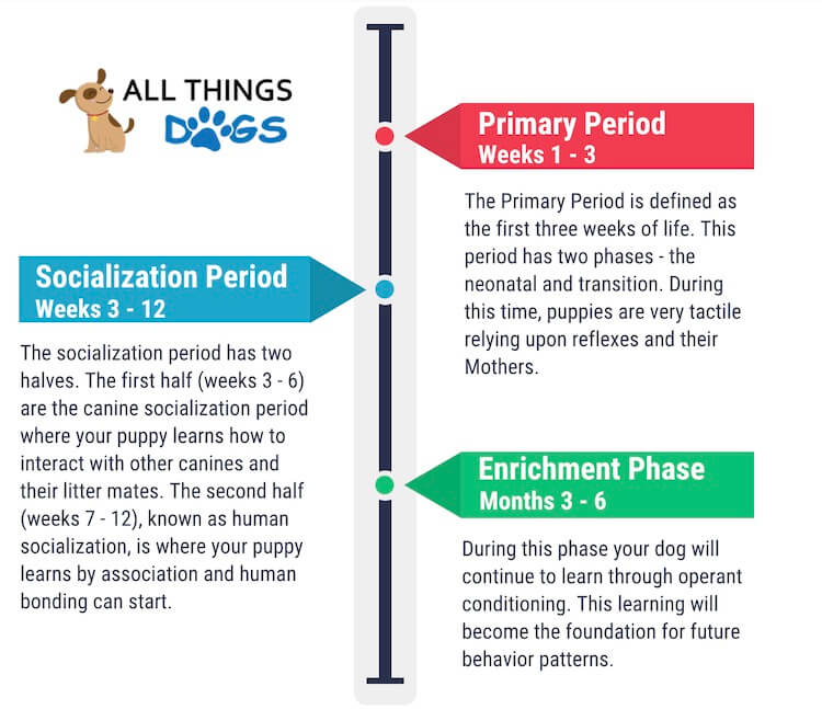 There are three main development phases of a dog: primary, sociziliation and enrichment.