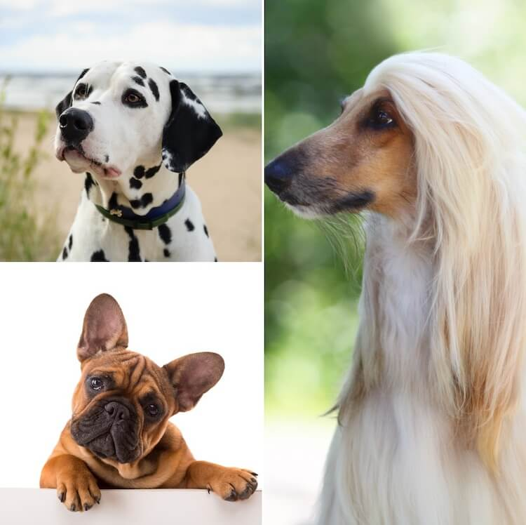 Dog Heads' Appearance