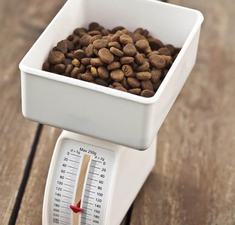 Measuring Dog Food