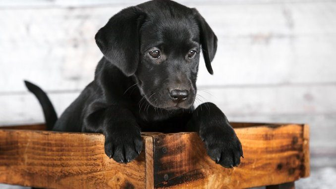 Best Black Dog Names Feature