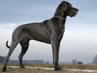 Big Dog Names Feature