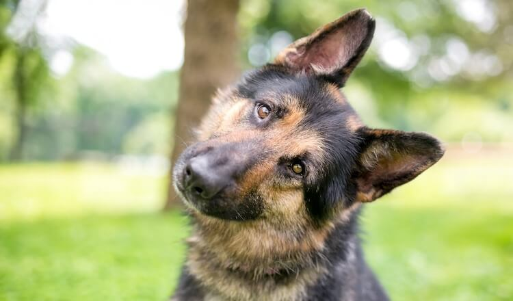 The A-Z of German Shepherd Names (150+ Male, Female & Puppy GSD