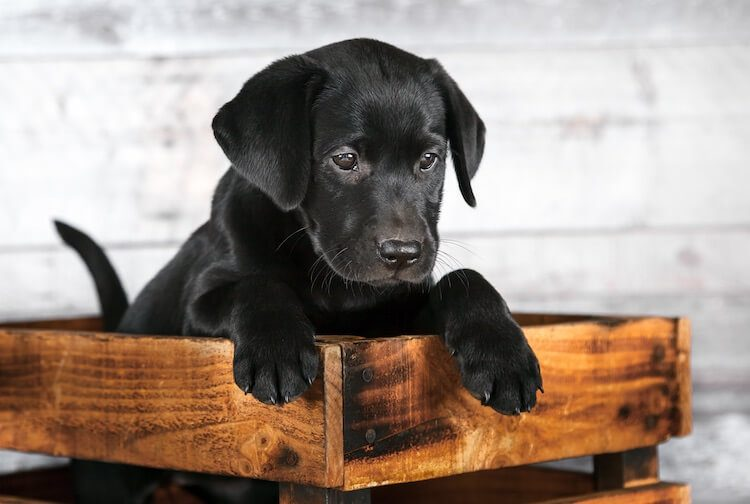 350+ Black Dog Names: The A-Z Of Beautiful Names For Black