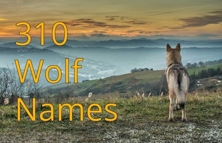 Wolf Names Feature