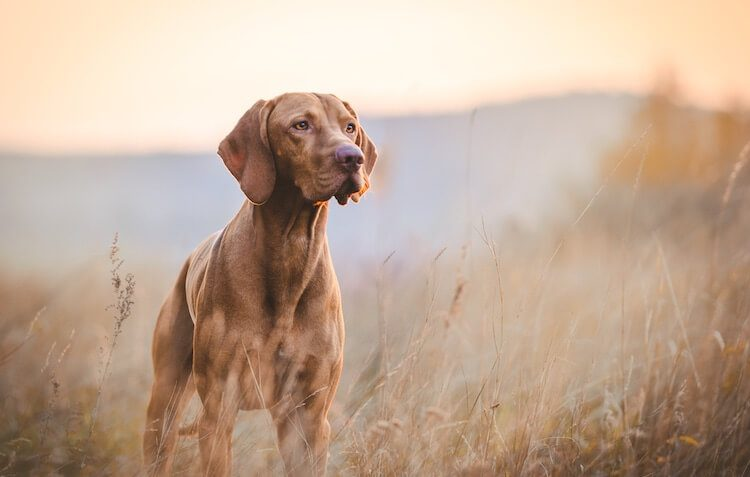 Hunting Dog Names Feature