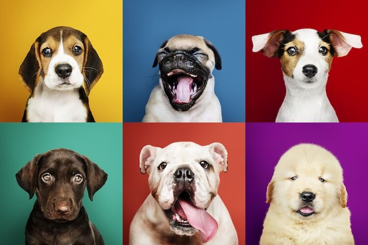 The A Z Of Puppy Names 300 Unique