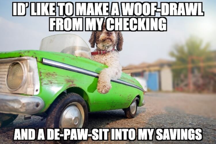 Car Dog Meme