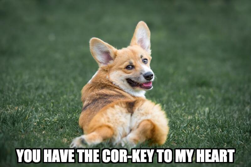 Corgi Heart Meme