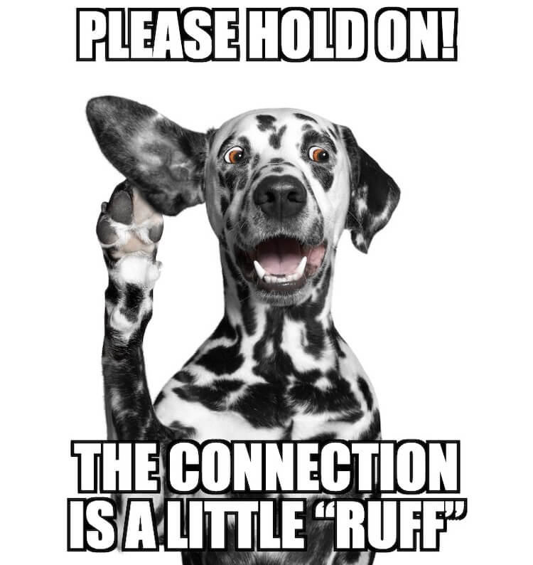 Dalmation Dog Joke