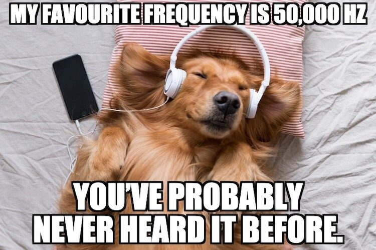 Dog Frequency Pun