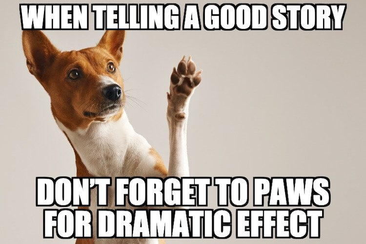 Dog Paw Meme