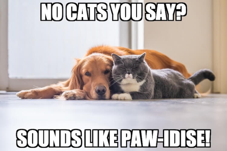 Dogs and Cats Pun