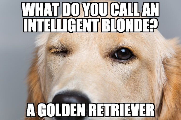 Golden Retriever Meme