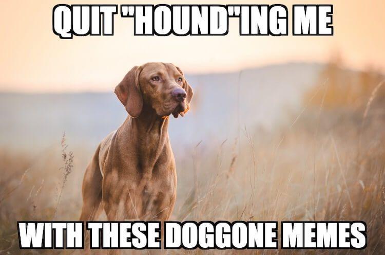 Hound Dog Meme