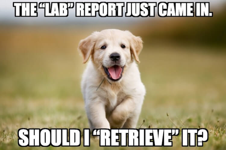 Lab Retriever Pun