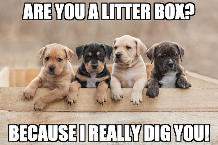 Litter Box Pun