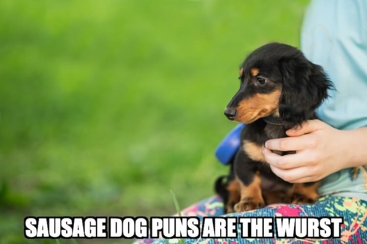 Sausage Dog Joke