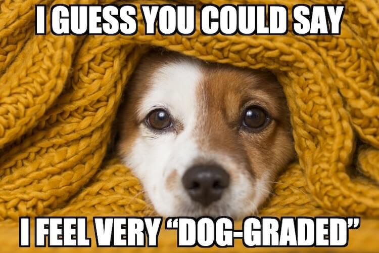 Small Dog Joke