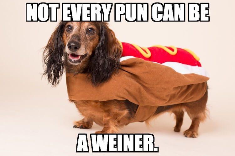 Weiner Dog Pun