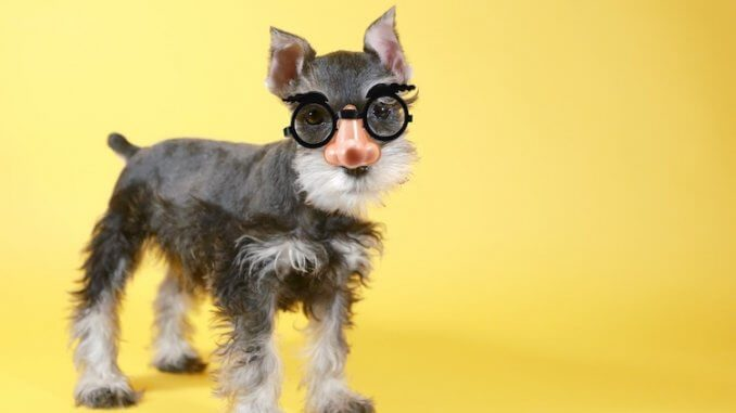 Nerdy Dog Names Feature